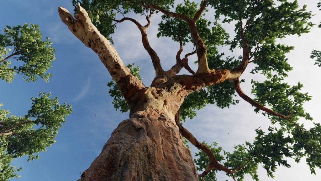 Eucaliptus-02-1536x864_Lumion10