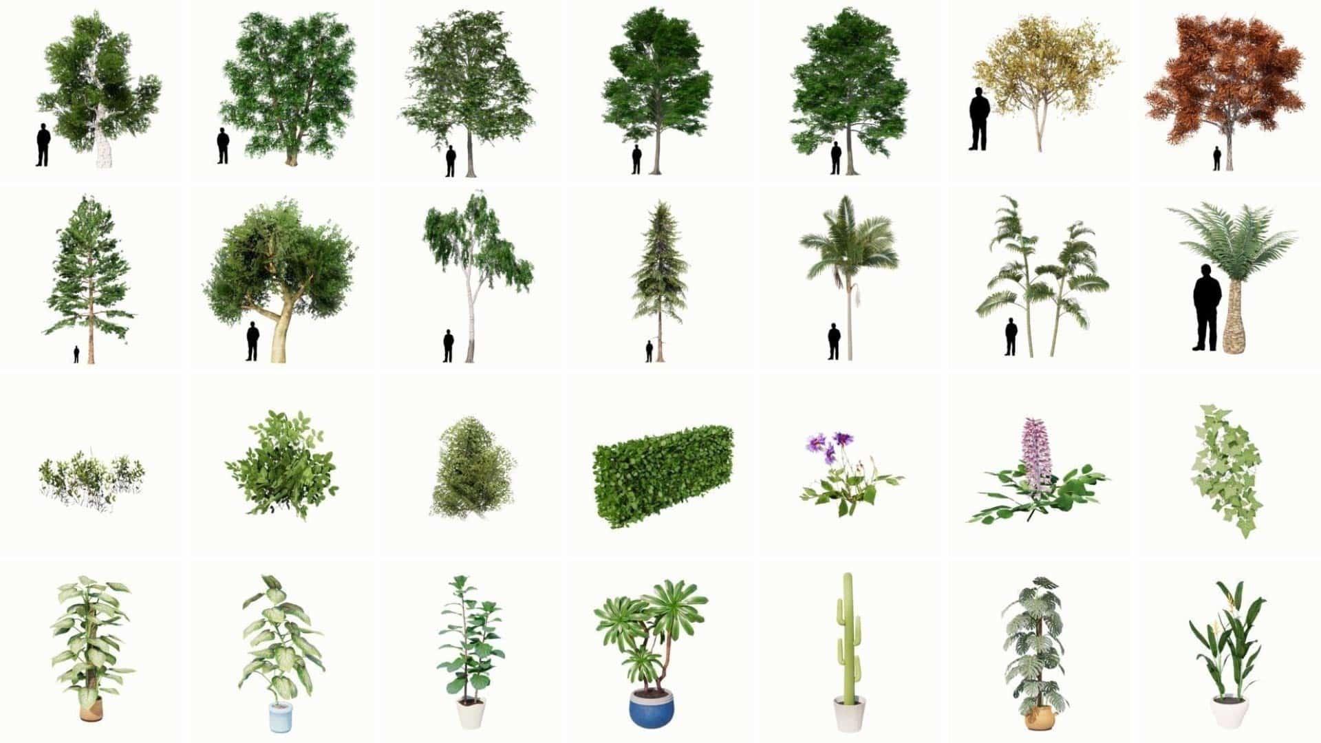 vegetation_optimized-1